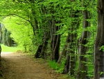Forest path summer
