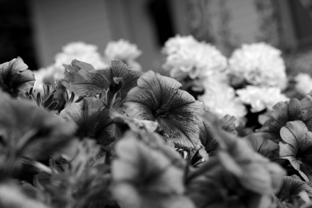 Monochrome Gardens - cool flowers, flower bed, summer flowers, Monochrome Gardens, flower garden