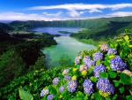 Flowers Of Sao Miguel Island, Azores
