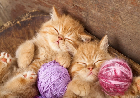 Sweet dreams - sleep, fluffy, kittens, beautiful, adorable, nap, sweet, cute, yarn, kitties, cats, friends