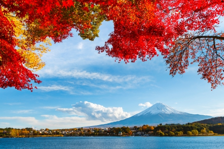 Mount Fuji In Autumn - Fall, stratovolcano, Japan, buildings, houses, trees, volcano, lake, mountain, water, snow, Honshu Island, island, branches, Autumn, Mount Fuji