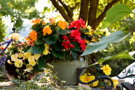Bountiful Flower Pot - summer flowers, sunny flowers, flower pot, pot, Bountiful Flower Pot, amazing flowers