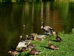 One Quacky Family
