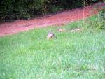 The Grey Groundhog Returns