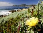Cape Town National Park