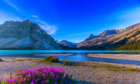 Twilight At Bow Lake - forest, dusk, Banff National Park, beautiful, sunset, lake, Canada, mountains, wildflowers, flowers, starry sky
