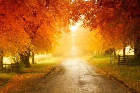 Autumn Colors - autumn, grass, orange, yellow, beautiful, trees, England, leaves, green, fences, grove, morning mist, road