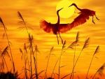 birds sunlight