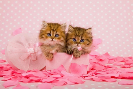 Persian kittens - rose, fluffy, kittens, box, scent, beautiful, adorable, fragrance, sweet, hat, cute, persian, petals, kitties, pink, cats