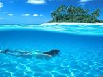 Scuba Diving in Paradise