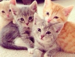 cute brothers & sisters