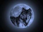 Wolf Blue Moon