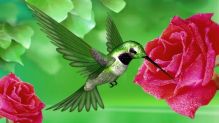 The Most Beautiful Bird