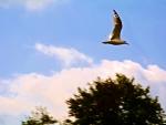 Blue Sky Swan