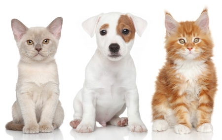 Adorable Friends - kitty, adorable, cat, cat face, dog face, paws, puppies, kitten, cats, animals, dogs, puppy, dog