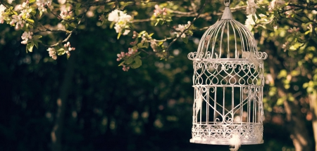 Takes flight - Takes flight, garden, flowers, birdcage