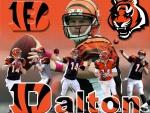 Andy Dalton: Cincinnati Bengals quarterback