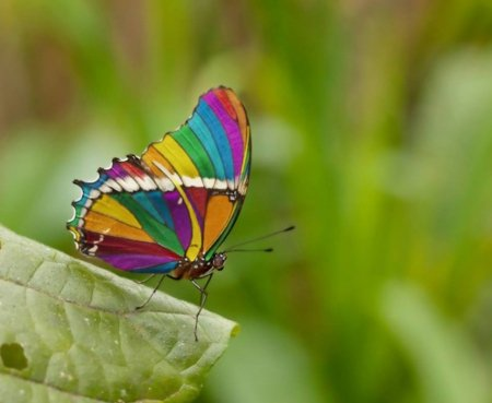Rainbow Butterfly - wings, butterfly, green, rainbow, animals, insects, leaf