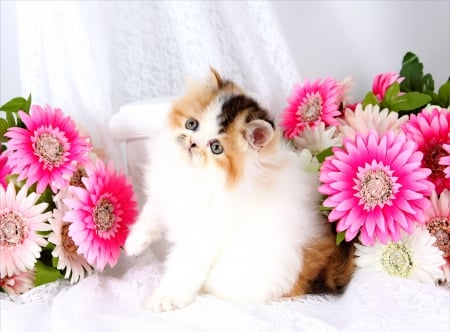 Cute persian kitty - pretty, lovely, kitty, pot, beautiful, adorable, cat, sweet, cute, persian, flowers, room, kitten