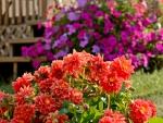 Super Summer Colors