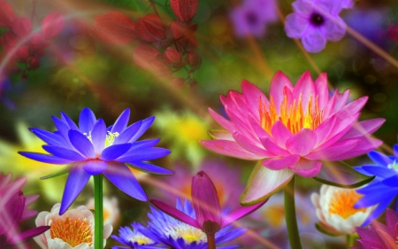 ✿⊱•╮Sacred╭•⊰✿ - lotus, beautiful, sacred, glory, flowers, pink, couple, lovely, sunlight, colors, love four seasons, worship, creative pre-made, water lilies, pond, purple, nature, wisdom