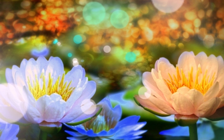 ✿⊱•╮Faith╭•⊰✿ - lotus, lovely, colors, love four seasons, worship, beautiful, creative pre-made, water lilies, sacred, glory, flowers, nature, wisdom, faith