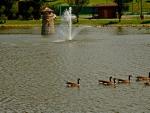 Serene Little Pond