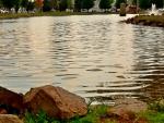 Scenic Park Pond