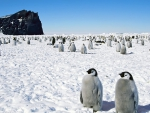 Crowd of Penguins