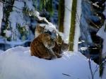 Snowbound Kitties