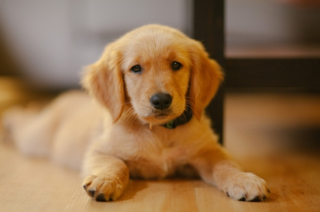 Dog - pretty, lovely, beautiful, animal, sweet, cute, puppys, animals, dogs, puppy, dog
