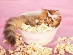 Popcorn kitty