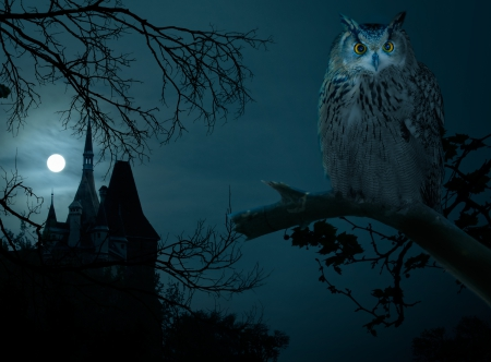 Halloween - owl, autumn, moon, halloween, hounted house, castle, night