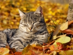 resting on a fall leaves
