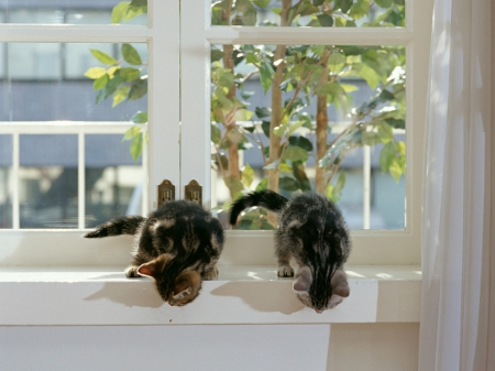pussy cats on a window - pussy cats, kittens, window, animals