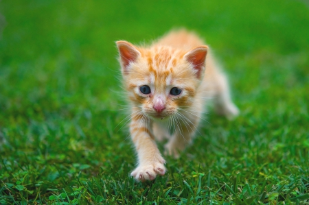 Lovely Cub - cute, lawn, small, kitten, sweet