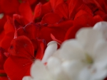 red and white macro
