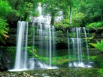 Beautiful forest cascades