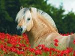 Horse between flowers