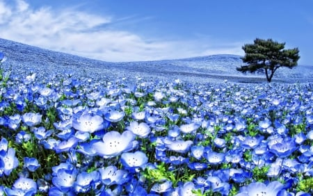 Image result for fields of blue