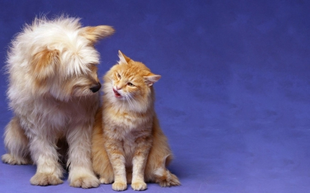 Best Friends - Shaggy, Dog, Animals, Cat