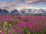 Field of Wild Flowers in British Columbia, Canada