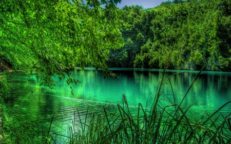 Lake Plitvice - plitvice, plitvices, lake plitvices, lake plitvice