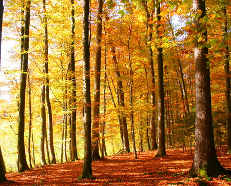 Elona Gay   Herbst   Autumn - beautiful place, peaceful, forest, wood, autumn, orange, leaves, splendor, colors color