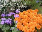 I love orange mums best of all...