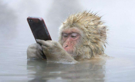 Monkey - primate, art, wallpaper, home, phone, fun, Monkey