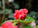 Summer rain rose