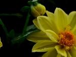 Yellow darkness