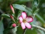 Beautiful Desert Flower