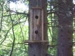 Bird Home sweet home